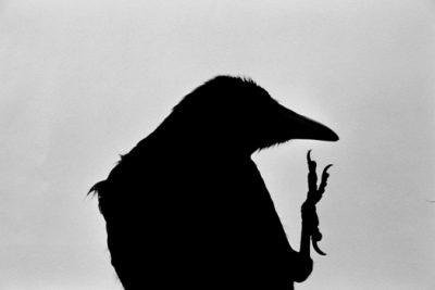 `ravens Fukase edited by hasegawa